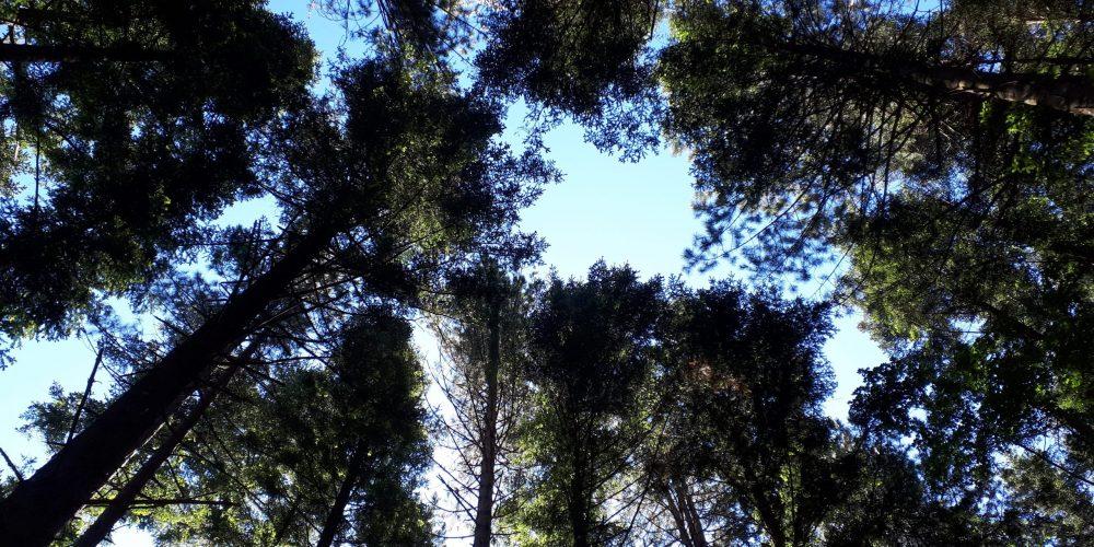 Esplorazione della foresta di Vallombrosa